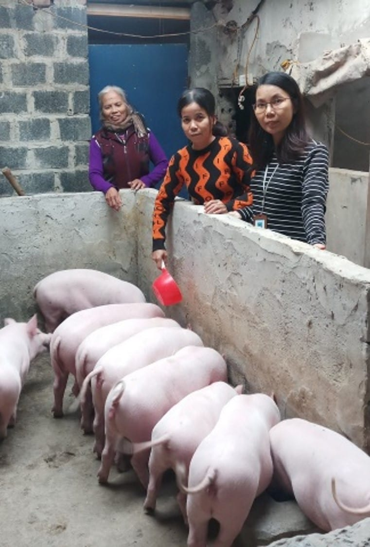 three woman and a stall of pigs in Vietnam
